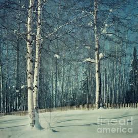Priska Wettstein - Still Winter