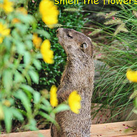 Stop And Smell The Flowers by Trina  Ansel