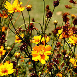 Evewin Lakra - Story Of A Yellow Cosmos