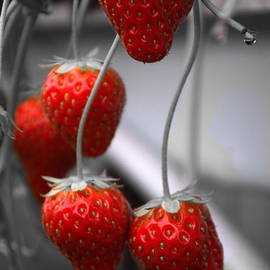 Strawberries by Michelle Meenawong