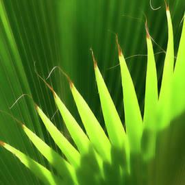 Stringy Palm by Vicki Hone Smith