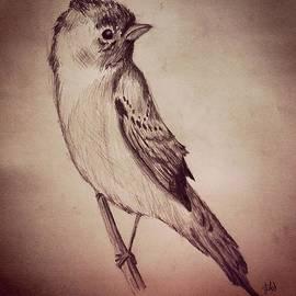 Jessica Sanders - Study of a Bird