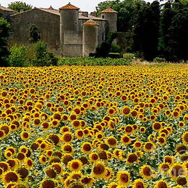 France  Art - Summer Bliss