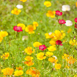 Summer Flowers by Svetlana Sewell