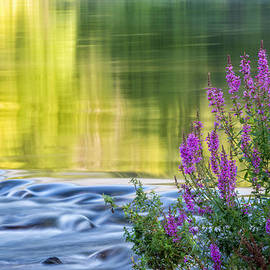 Summer Reflections by Bill Wakeley