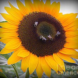 Dora Sofia Caputo Photographic Design and Fine Art - Summertime Beauty - Sunflower