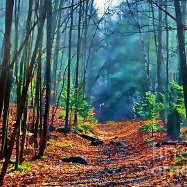 Andrea Kollo - Sun Dappled Forest