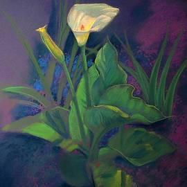 Kent Looft - Sun Glowing Calla