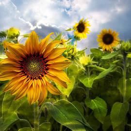 Sunflower Dream by Debra and Dave Vanderlaan