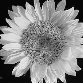 Jeannie Rhode - Sunflower in Monochrome