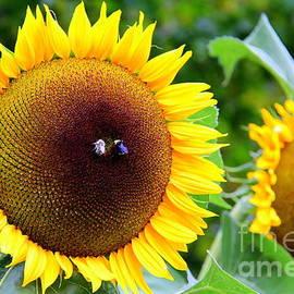 Sunflower Joy by Michele Hancock