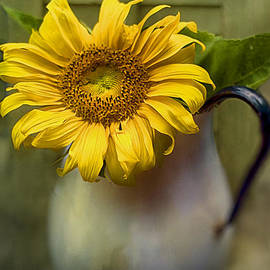 Kathy Jennings - Sunflower Series I