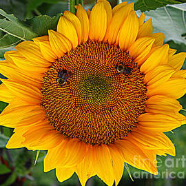 Sunflower Smile by Dora Sofia Caputo
