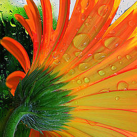 Tanya Tanski - Sunny Days Ahead......