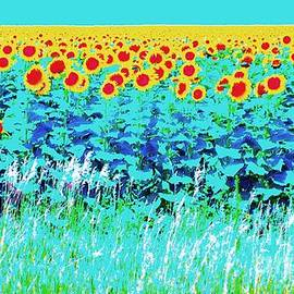 Ann Johndro-Collins - Sunny Kansas