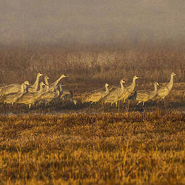 Sandhill Crane sunrise in New Mexico  by Ruth Jolly