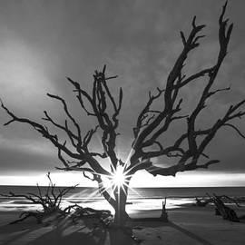 Sunrise Jewel in Black and White by Debra and Dave Vanderlaan