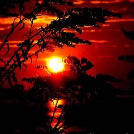 Donnie Freeman - Sunrise Wheat
