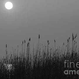 Sunset and Grasses by Inge Riis McDonald