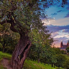 Jenny Rainbow - Sunset at Petrin Park. Prague