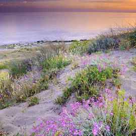 Sunset at the beach.  Flowers on the sand by Guido Montanes Castillo