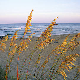 Sunset Colors Reflect On Sea Oats by Steve Winter