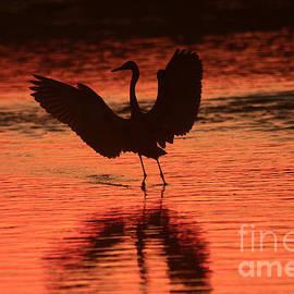 John F Tsumas - Sunset Dancer