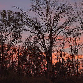 Carole-Anne Fooks - Sunset Like Fire in the Trees