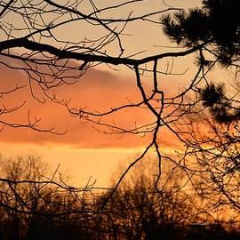 Sonali Gangane - Sunset Mood