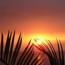 Sunset Palms by Karen Nicholson