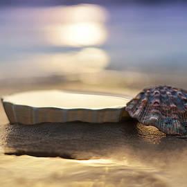 Laura Fasulo - sunset shells