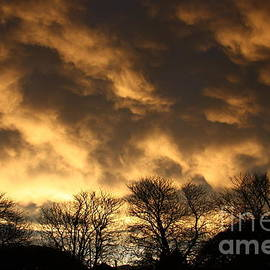 Nareeta Martin - Sunset Silhouettes