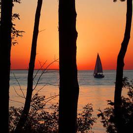 David T Wilkinson - Sunset Through the Trees