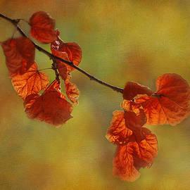 Ivelina G - Sunshine and Red