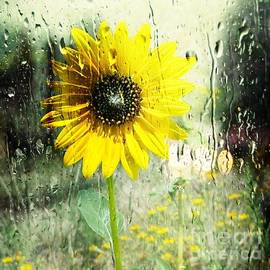 Michelle Frizzell-Thompson - Sunshine through the Rain