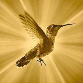 Mighty Hummingbird