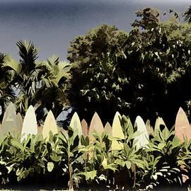 Paulette B Wright - Surfboard Fence - Old Postcard