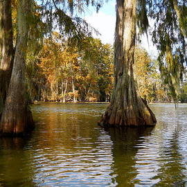 Beth Vincent - Swamp - Cypress Trees