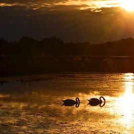 AnnaJo Vahle - Swan Song