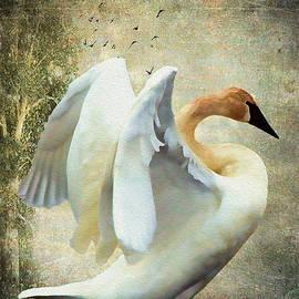 Swan - Summer Home by Kathy Bassett