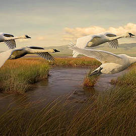 Swans Aloft at Dawn by Spadecaller