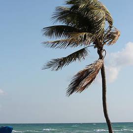 Paula Santos - Swaying in the Wind