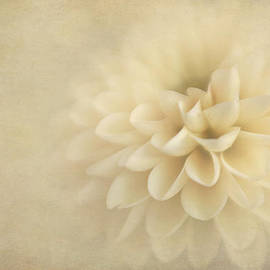 Sweet Dahlia Dreams by David and Carol Kelly