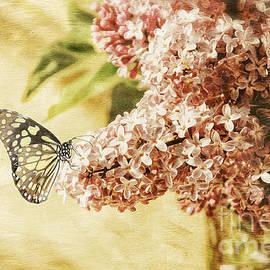 Lois Bryan - Sweet Lilacs