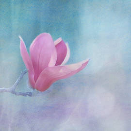 Kim Hojnacki - Sweet Magnolia