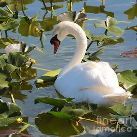 Carol Groenen - Sweet Swan