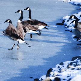 Peggy Franz - Synchronize Skating Geese