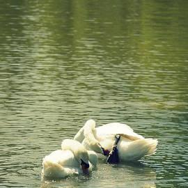 Laurie Perry - Synchronized Swan Bath