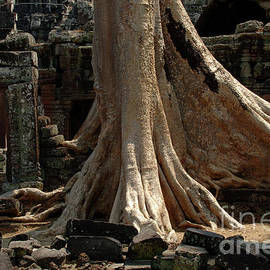 Bob Christopher - Ta Prohm Cambodia