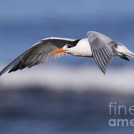 Taking a tern by Bryan Keil
